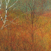 Grasses and Old Birches  - $16,000.00